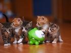Ufacık Kediler